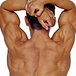 Image of a muscular back.